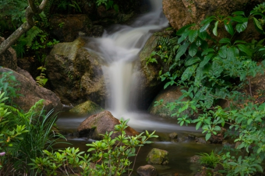 garden_lush-waterfall