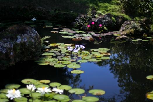 garden_the-water-garden