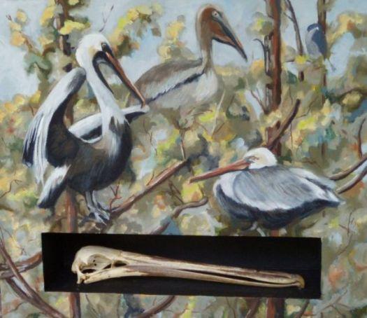 hutchison-pelican