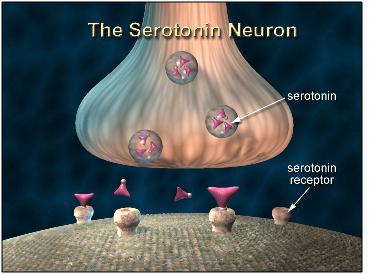 seratonin