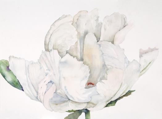 large white peony